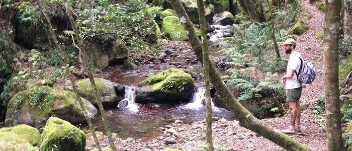 Hlatikhulu Forest