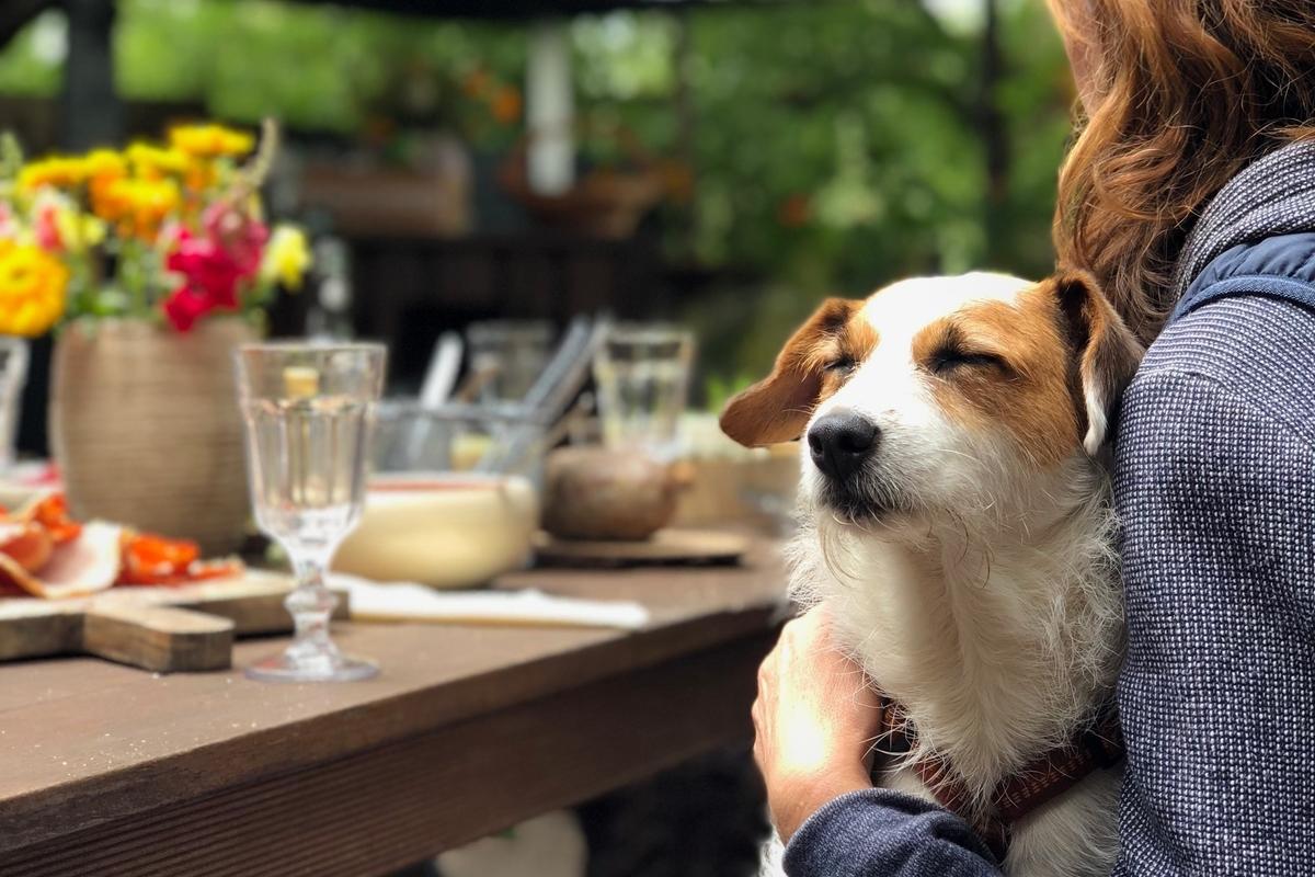 Pet friendly restautants kwazuly natal midlands