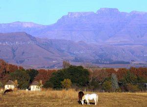by region - 7 - Experience the Drakensberg ardmore horses berg skyline1