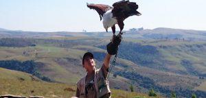 Falcon ridge bird of prey display