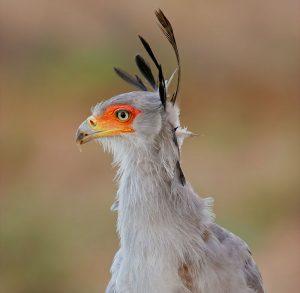 by region - 6 - Experience the Drakensberg Secretary birds01